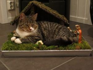 Katten myser i julkrubban;)